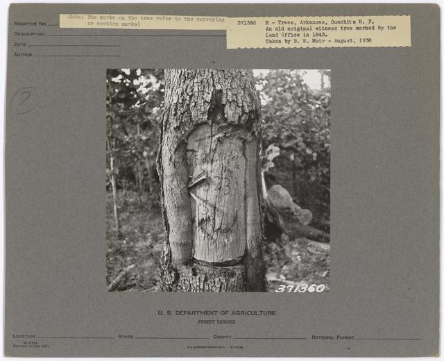 Historical Trees - Arkansas
