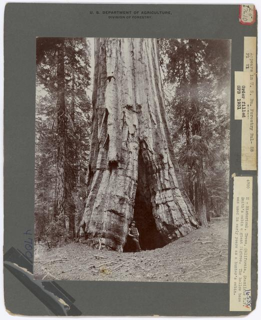 Historical Trees - California