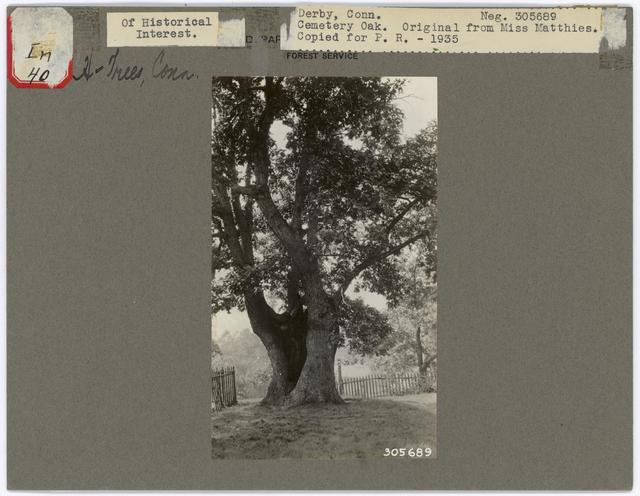 Historical Trees - Connecticut