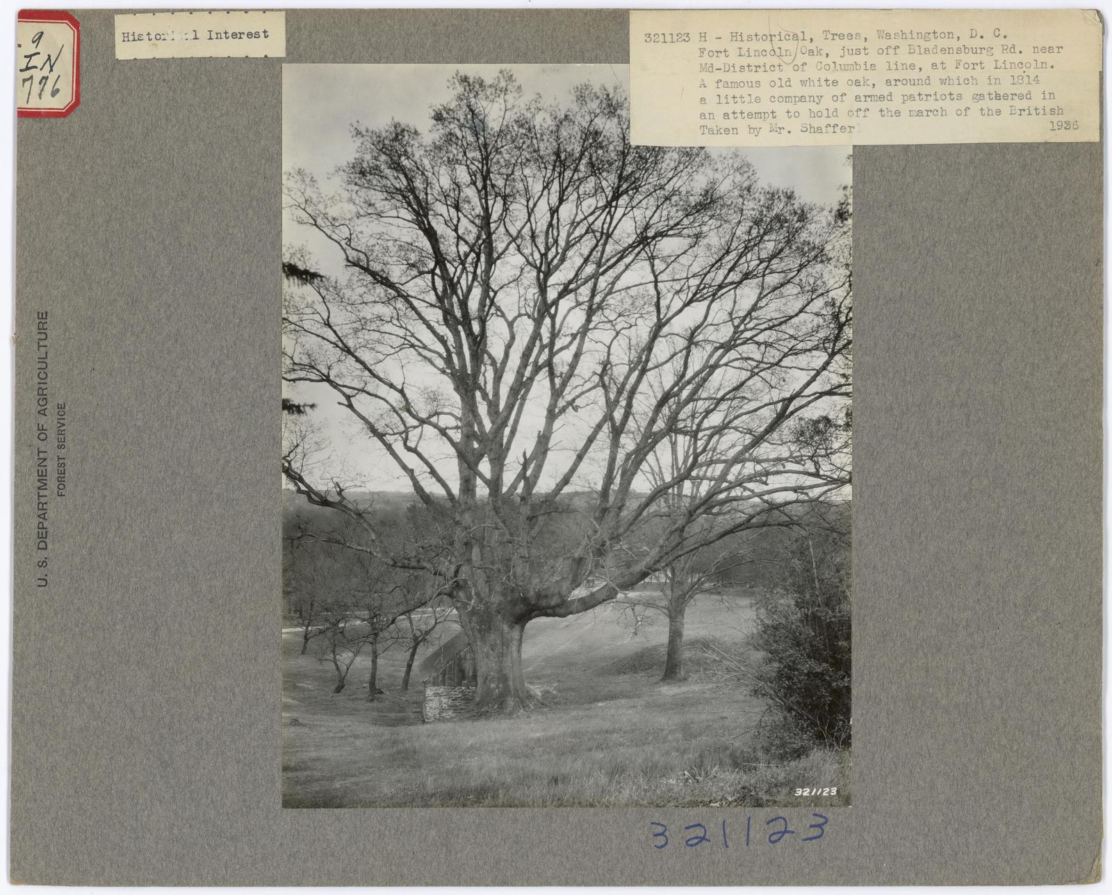Historical Trees - District of Columbia