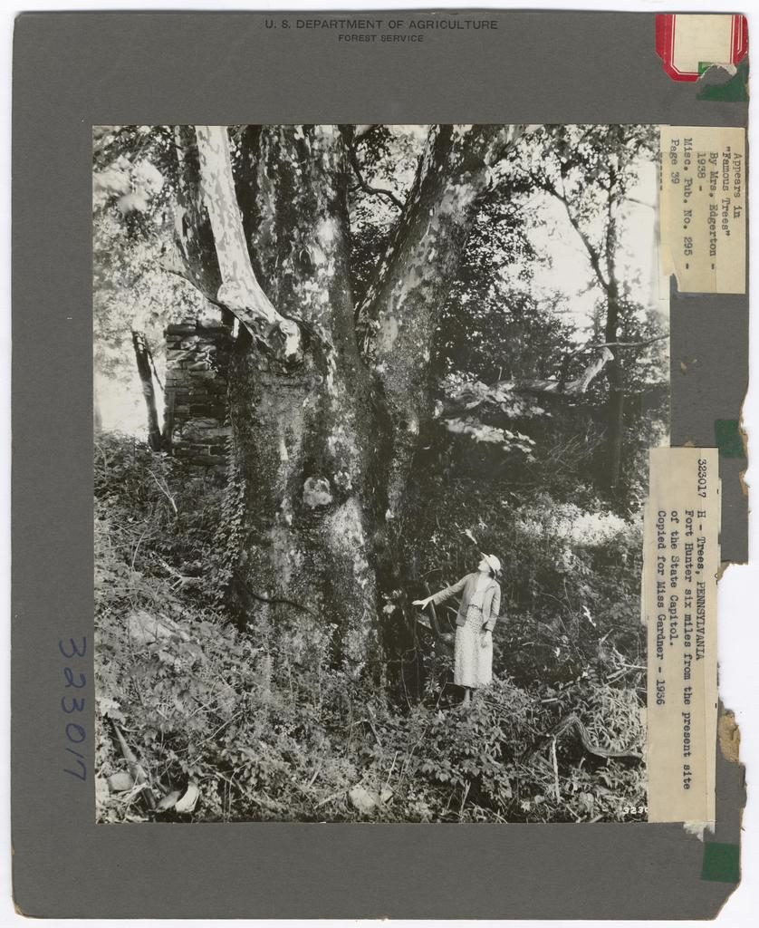 Historical Trees - Pennsylvania