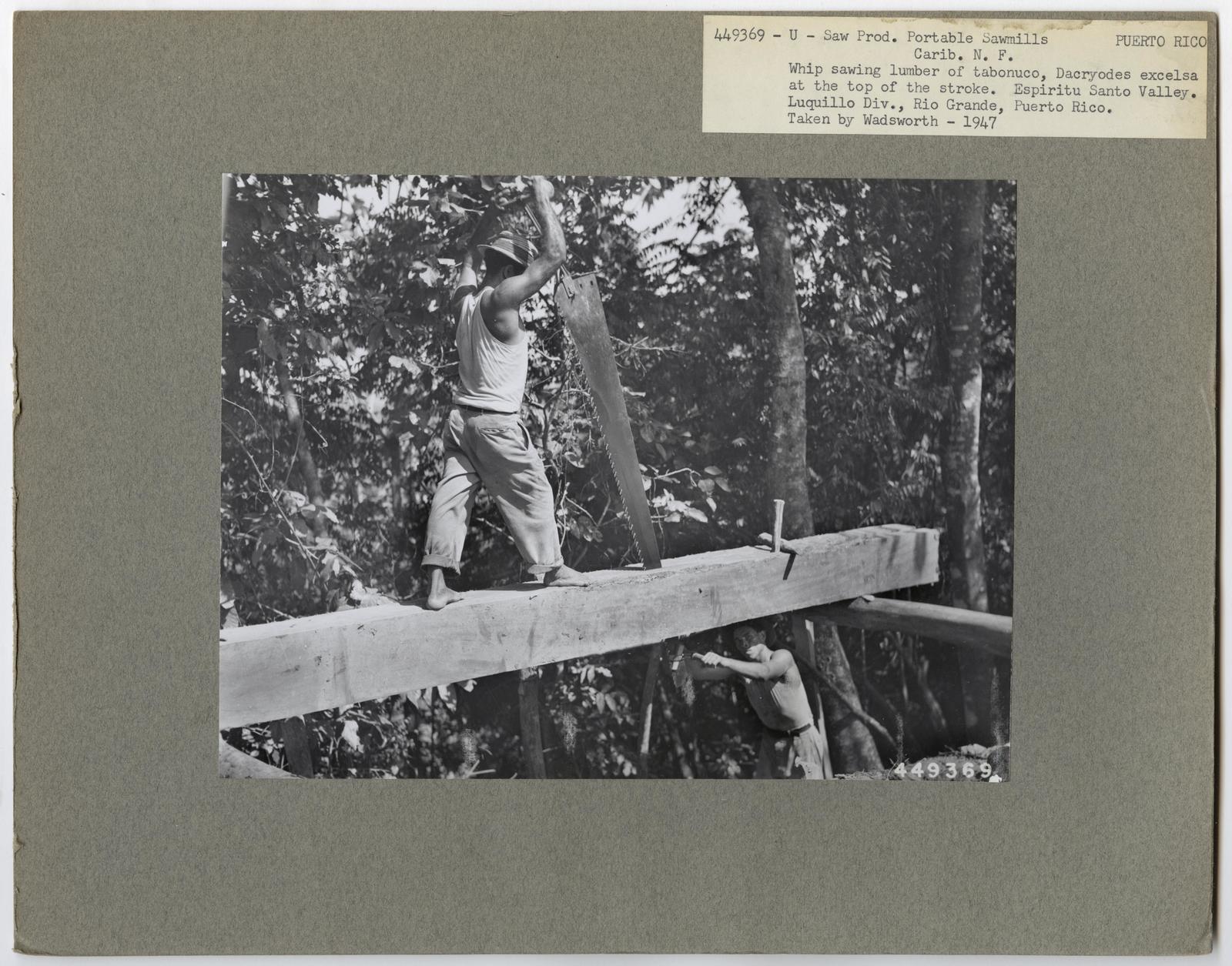 Large Sawmills - Puerto Rico