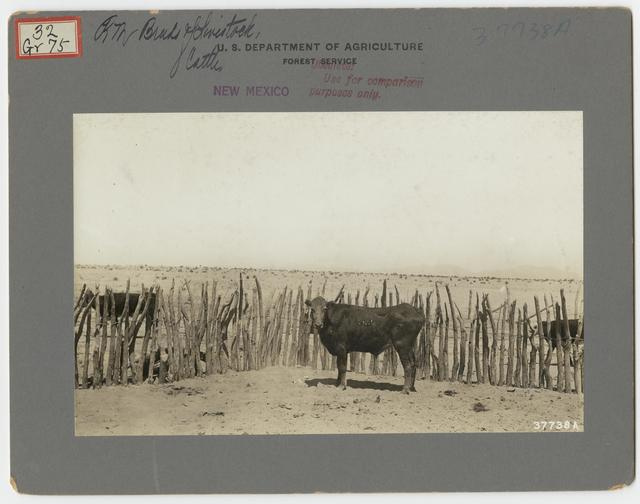 Livestock Cattle - All States