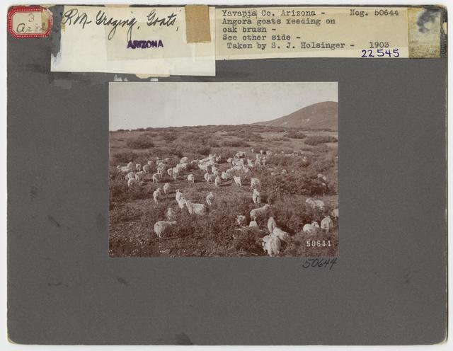 Livestock Goats - All States