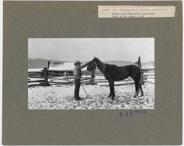 Livestock Horses - All States