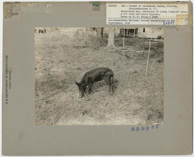 Livestock Pigs - All States