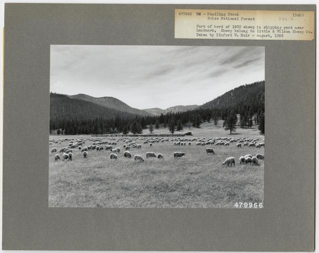 Livestock Sheep - All States