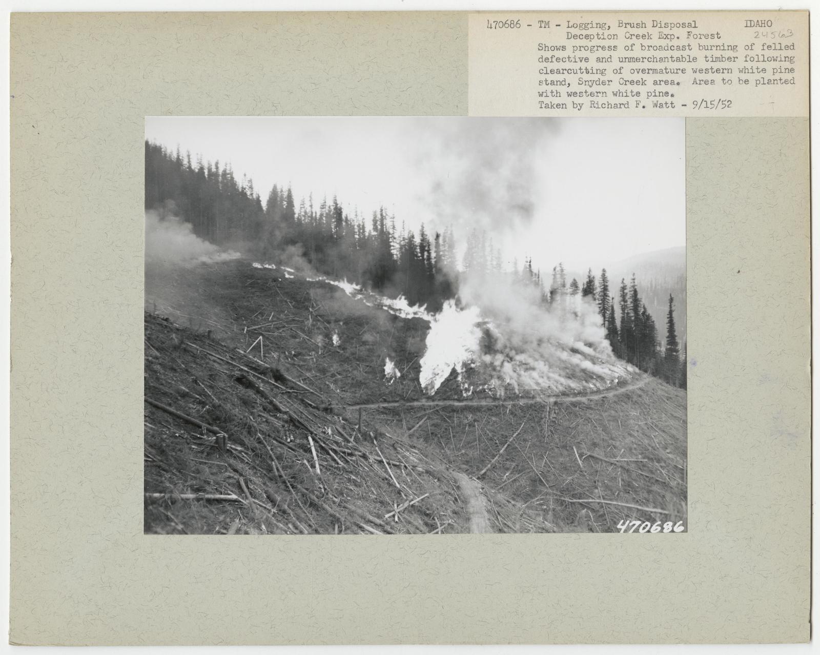 Logging: Brush Disposal - Idaho