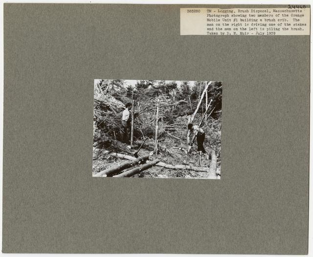 Logging: Brush Disposal - Massachusetts