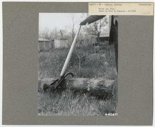Logging: Bucking - Connecticut