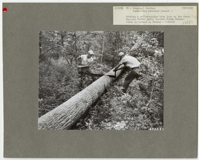 Logging: Bucking - Kentucky