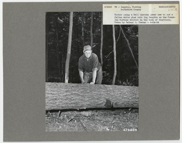 Logging: Bucking - Massachusetts