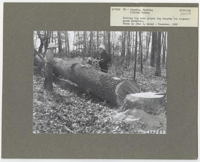 Logging: Bucking - Michigan