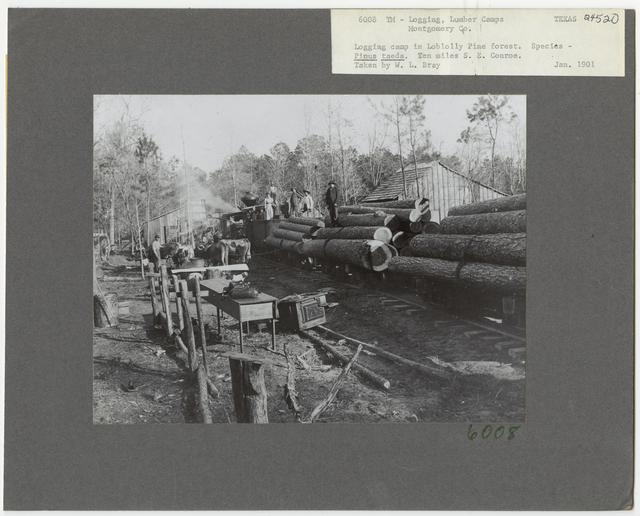 Logging Camps and Crews - Texas