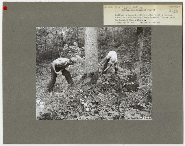 Logging: Felling - Kentucky