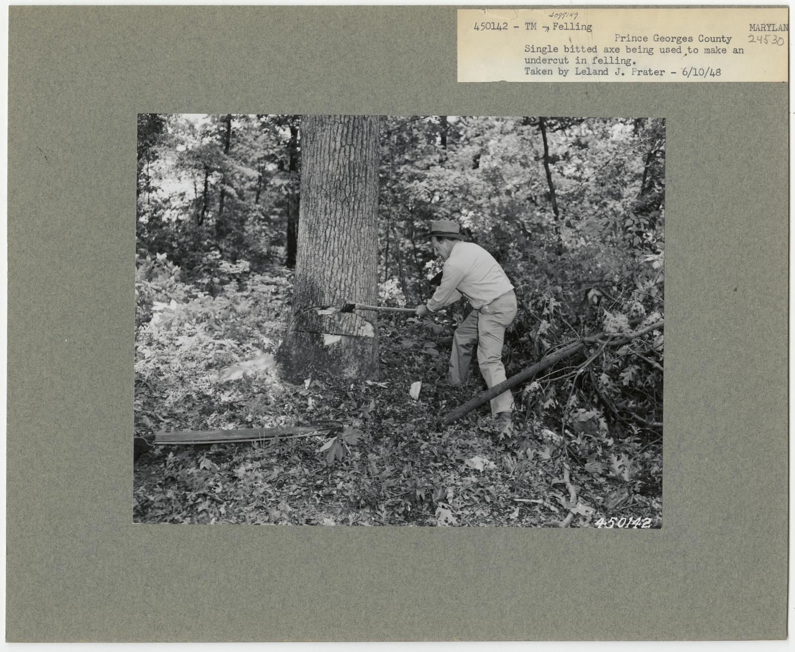 Logging: Felling - Maryland