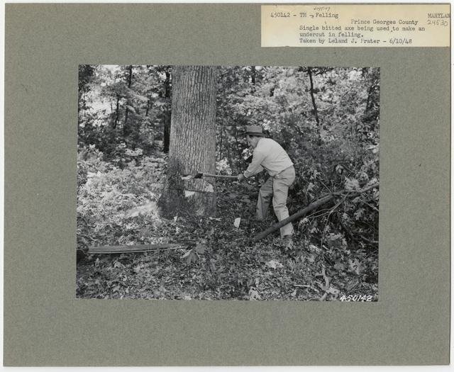 Logging: Felling - Maryland
