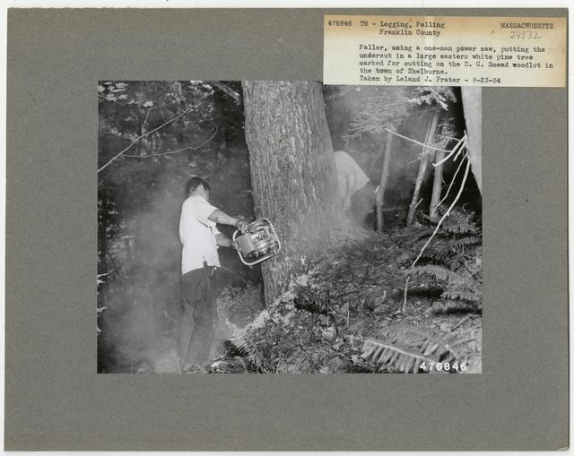 Logging: Felling - Massachusetts