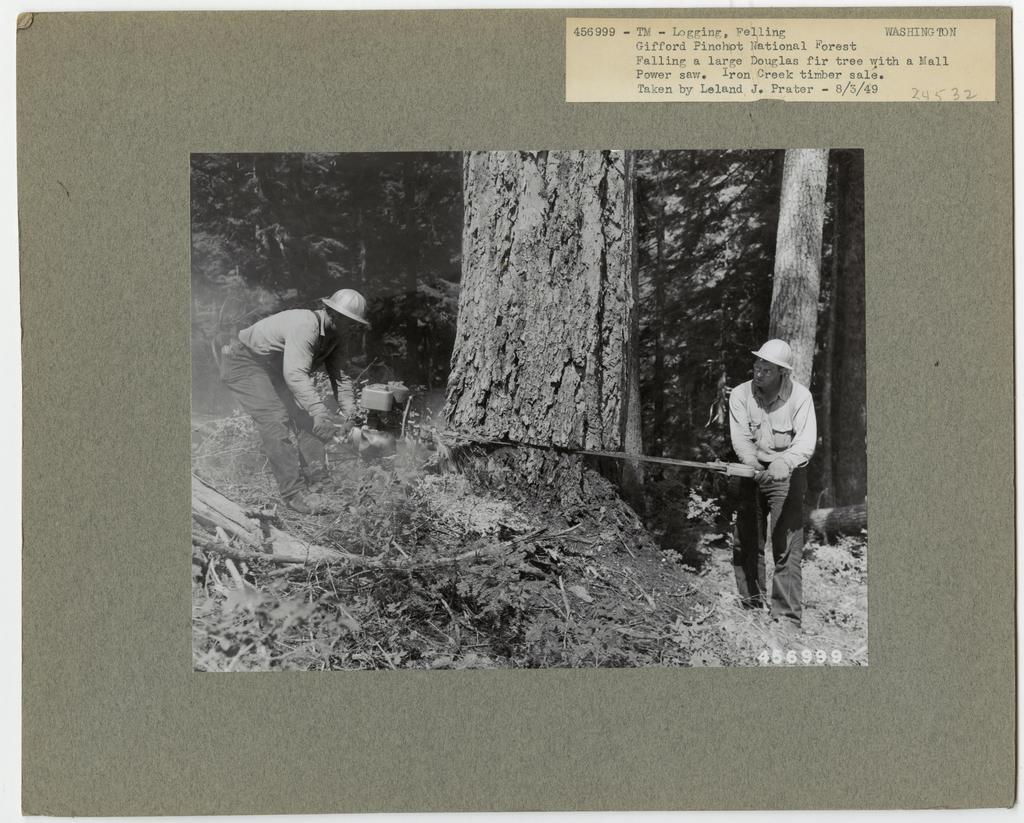 Logging: Felling - Washington