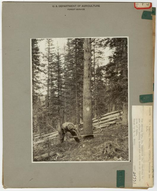 Logging: Felling - Wyoming