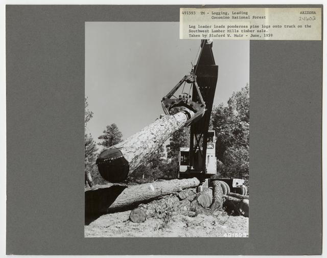 Logging: Loading Logs - Arizona