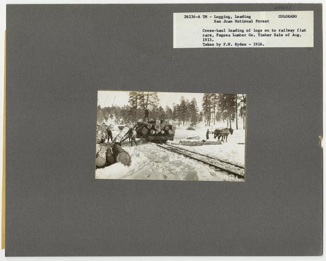 Logging: Loading Logs - Colorado