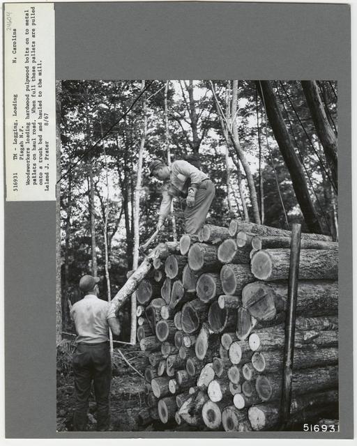Logging: Loading Logs - North Carolina