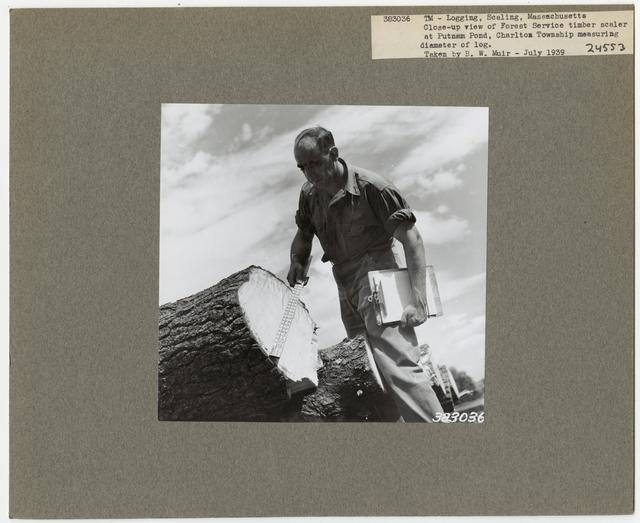 Logging: Scaling - Massachusetts