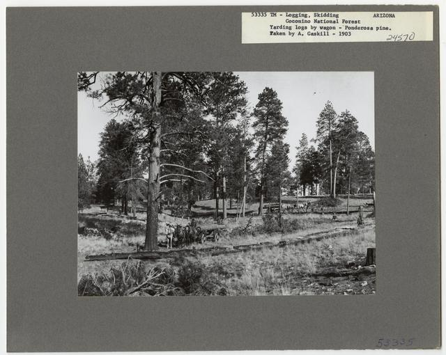 Logging: Skidding with Animals - Arizona