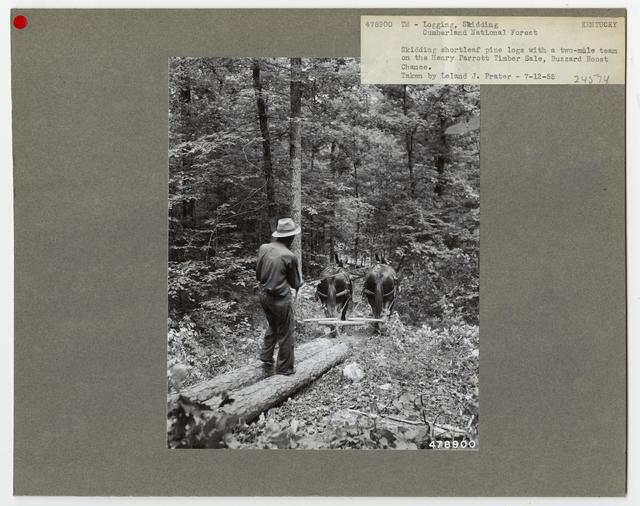 Logging: Skidding with Animals - Kentucky