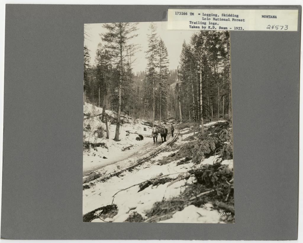 Logging: Skidding with Animals - Missouri