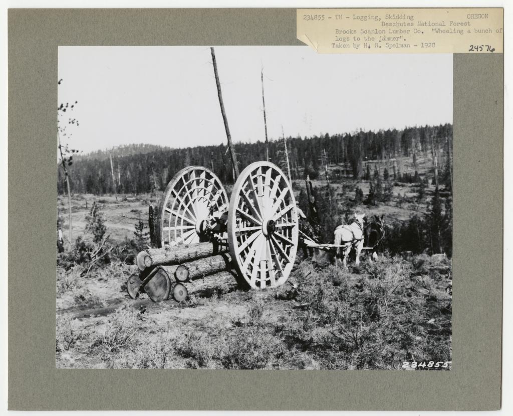 Logging: Skidding with Animals - Oregon