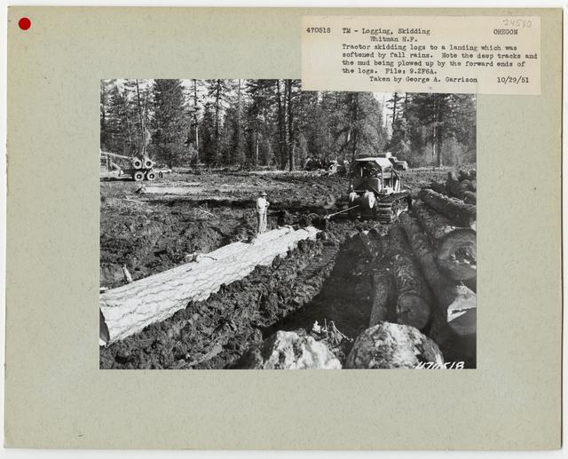 Logging: Skidding with Tractors - Oregon