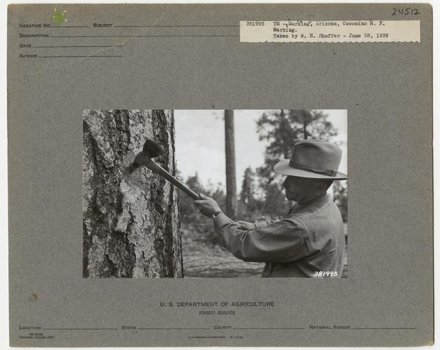 Logging -Timber Management -Marking - Colorado