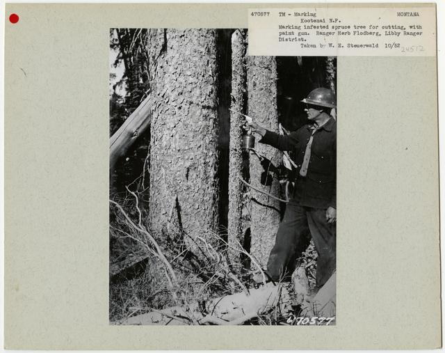 Logging -Timber Management -Marking - Montana