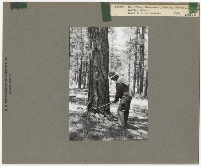 Logging -Timber Management -Marking - New Mexico