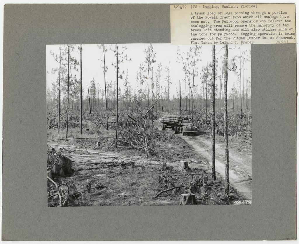 Logging: Transportation: Trucks - Florida
