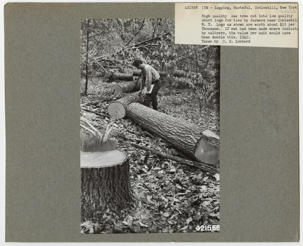 Logging Waste - All States