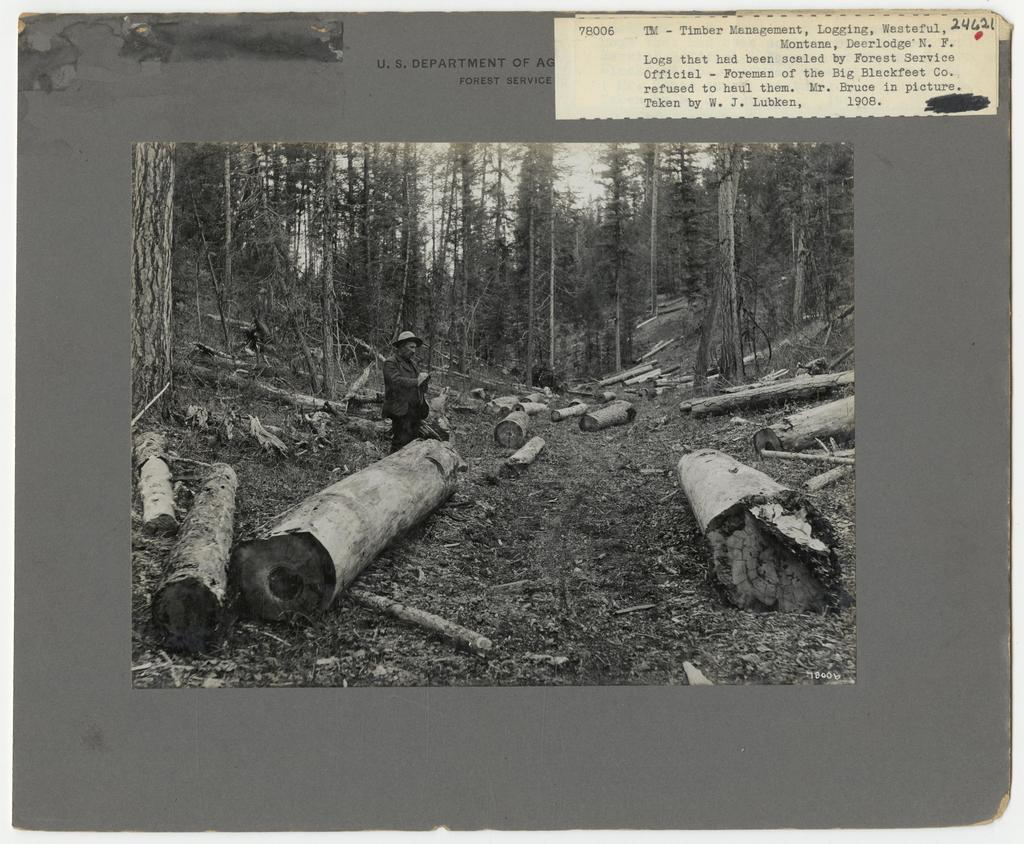 Logging Waste - All States