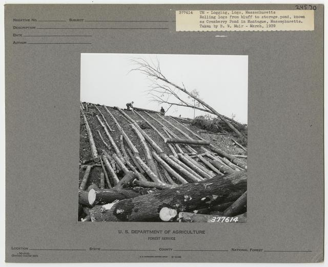 Logs & Log Decks - Massachusetts