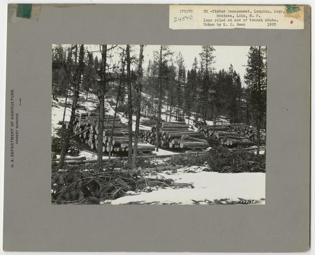 Logs & Log Decks - Montana