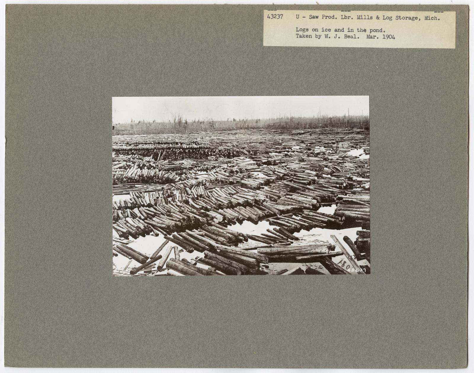 Mills, Milling and Log Storage - Michigan