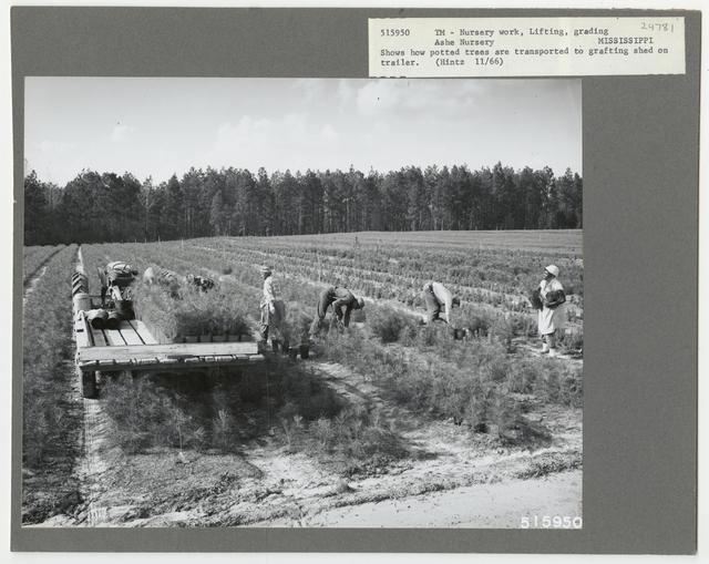 Nurseries: Planting Stock - Mississippi