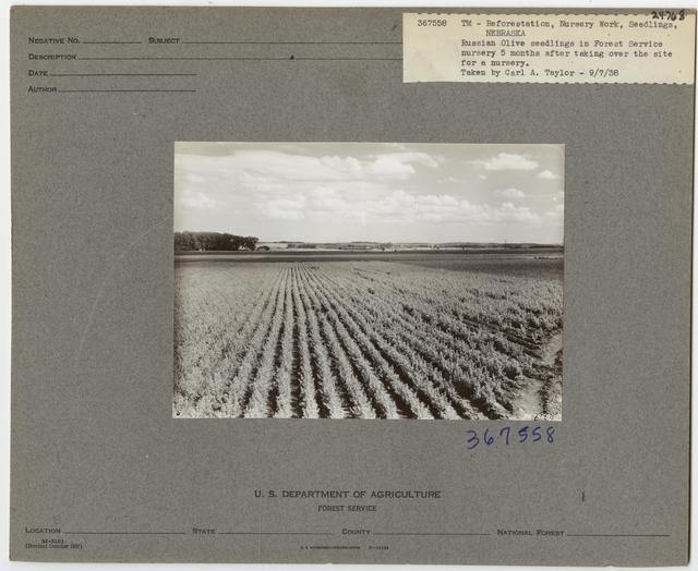 Nurseries: Planting Stock - Nebraska