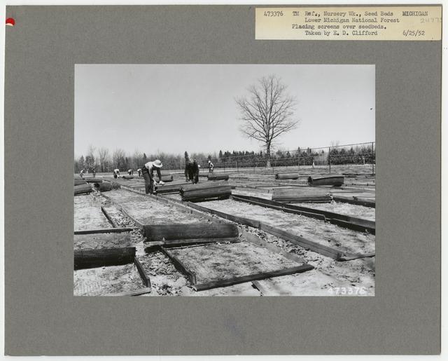 Nursery Work: Seed Beds - Michigan