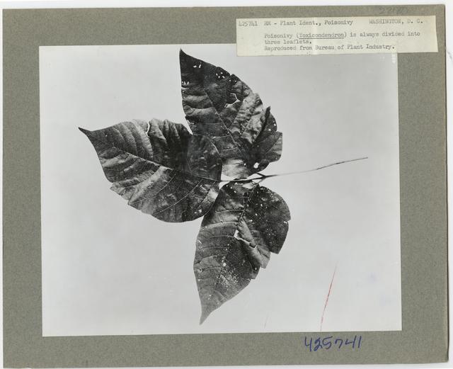 Poisonous Plants - All States