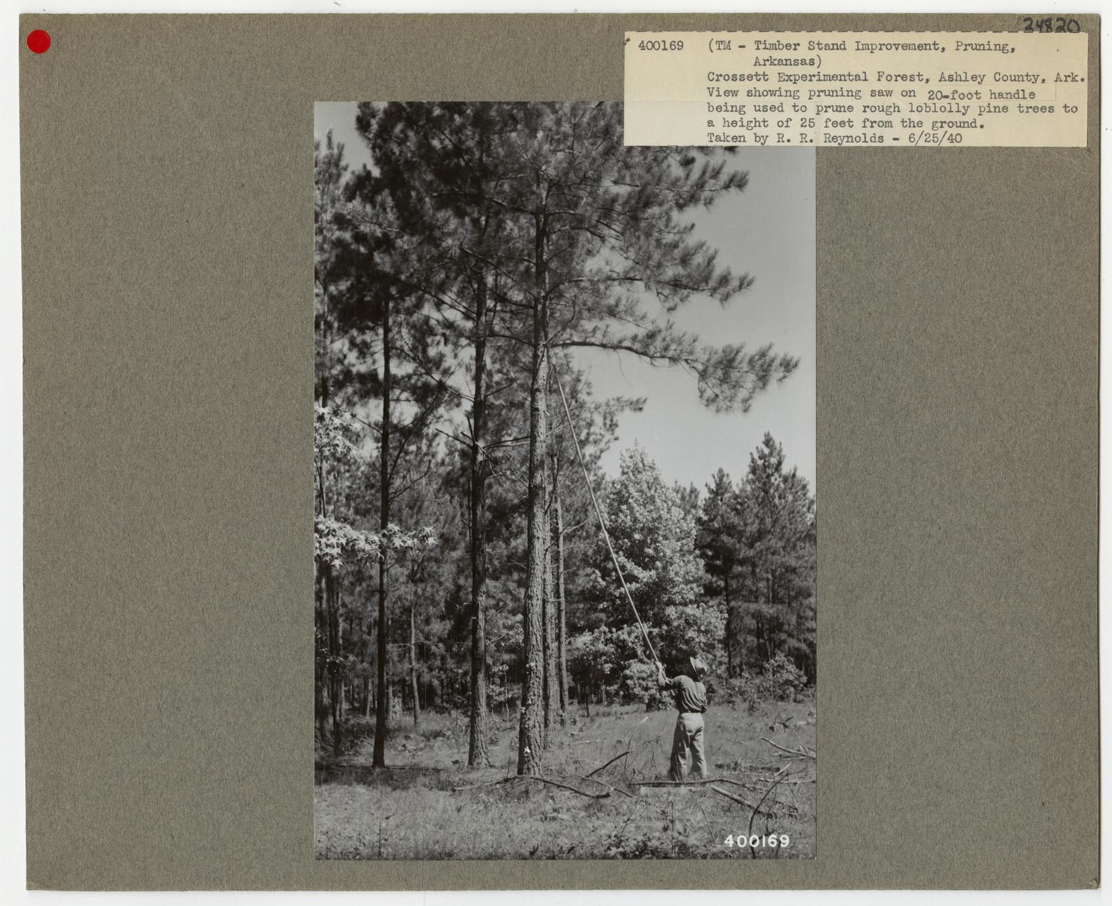Pruning - Arkansas