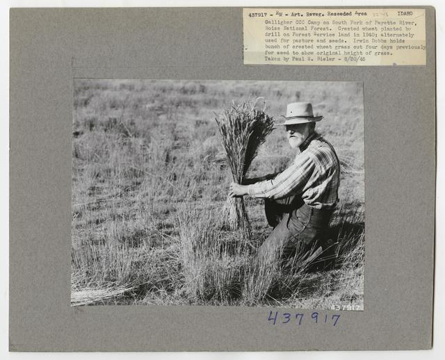Range Revegetation - Plant Control - Idaho