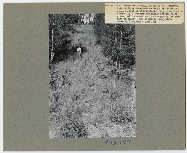 Range Revegetation - Plant Control - Montana