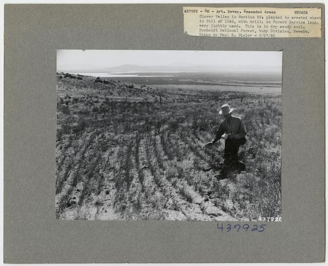 Range Revegetation - Plant Control - Nevada